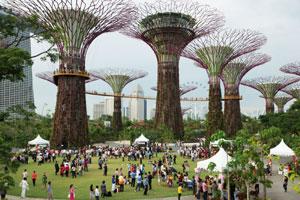 Supertree Grove Singapore day tour