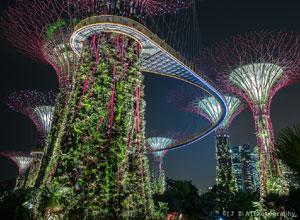 Supertree Grove Singapore Near View